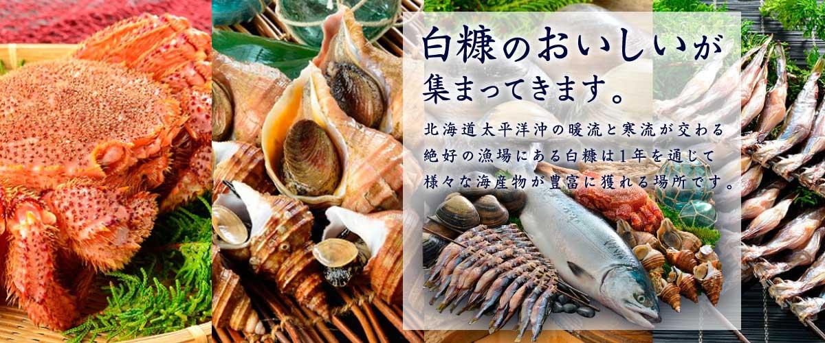 集まってきます。白糠のおいしいが北海道太平洋沖の暖流と寒流が交わる 絶好の漁場にある白糠は1年を通じて 様々な海産物が豊富に獲れる場所です。