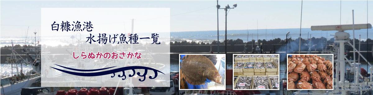 白糠漁港水揚げ魚種一覧